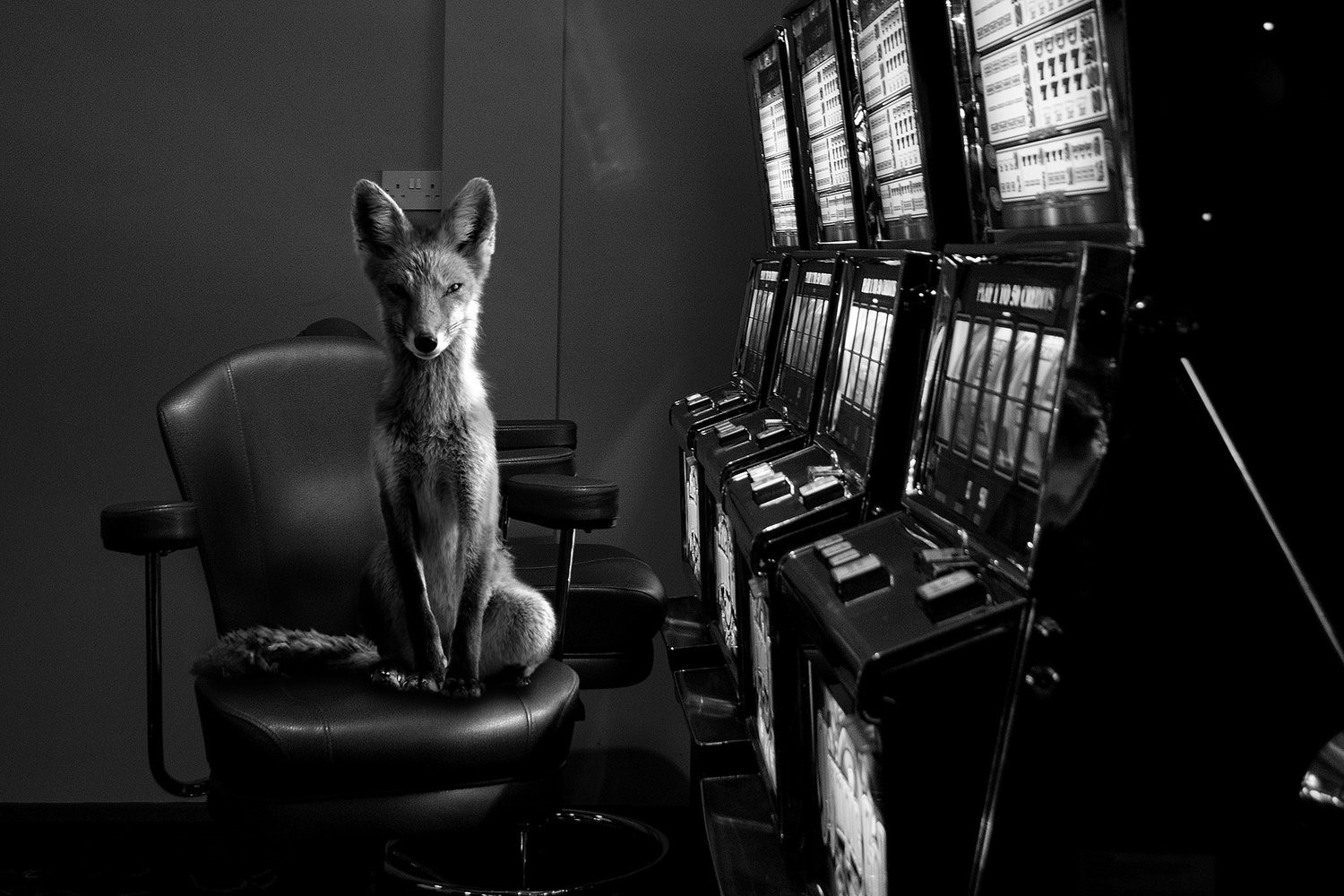 Totem Fox, Jason McGroarty